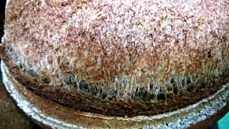Wholegrain Sourdough